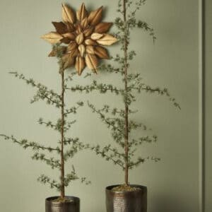 Cedertræ PVC