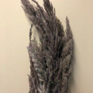 Eryanthus grå/lilla