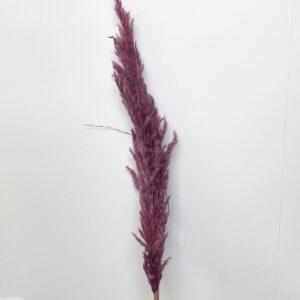 Eryanthus lys lilla shopbillede