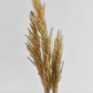 Eryanthus/zebragræs natur