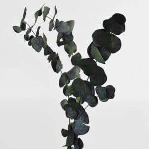 Eucalyptus gren shopbillede