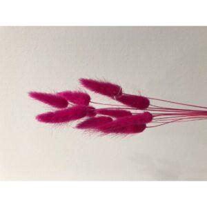 Lagurus i pink