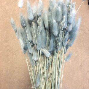 Lagurus/harehaler blå/grøn