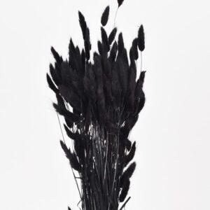 Lagurus:harehaler i sort