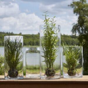 Miljøbillede vase cylinder 20x30 cm.