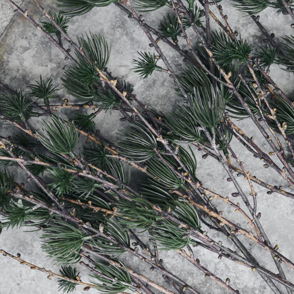 Nærbillede af gren med gran