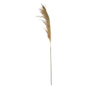 Pampas græs