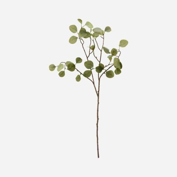 Shopbillede gren eucalyptus
