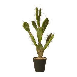Shopbillede kaktus 60 cm